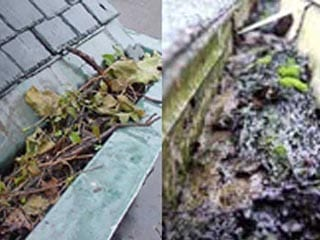 Clogged Gutters that need gutter cleaners